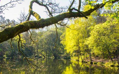 Sorties dans la forêt de Brocéliande