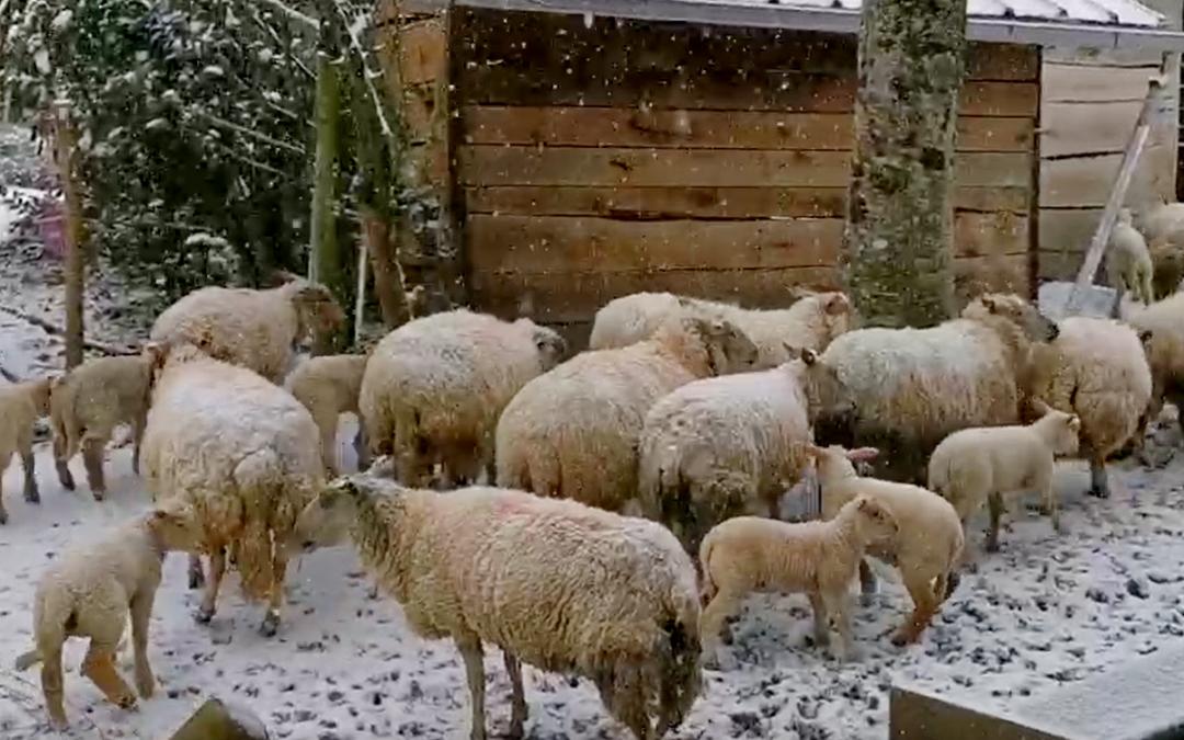 La neige s'invite dans le pays d'Auray